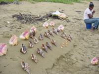 <h2>TRINIDAD</h2><p>GORGEOUS SHELLS ON A PRETTY BEACH</p>