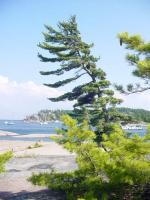 <h2>NORTH CHANNEL GEORGIAN BAY</h2><p>YOU CAN SEE WHY THE GROUP OF SEVEN PAINTED THESE VIEWS.</p>